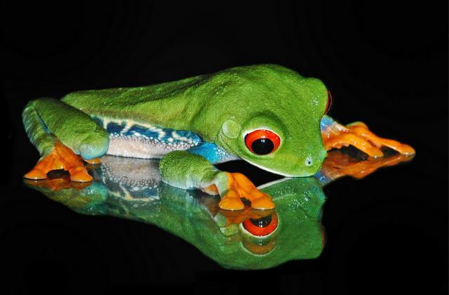 amphibian-michael-kern