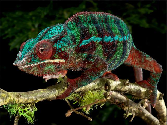 reptiles-michael-kern