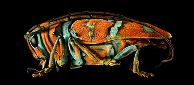levon-biss-jewel-longhorn-beetle-640x280